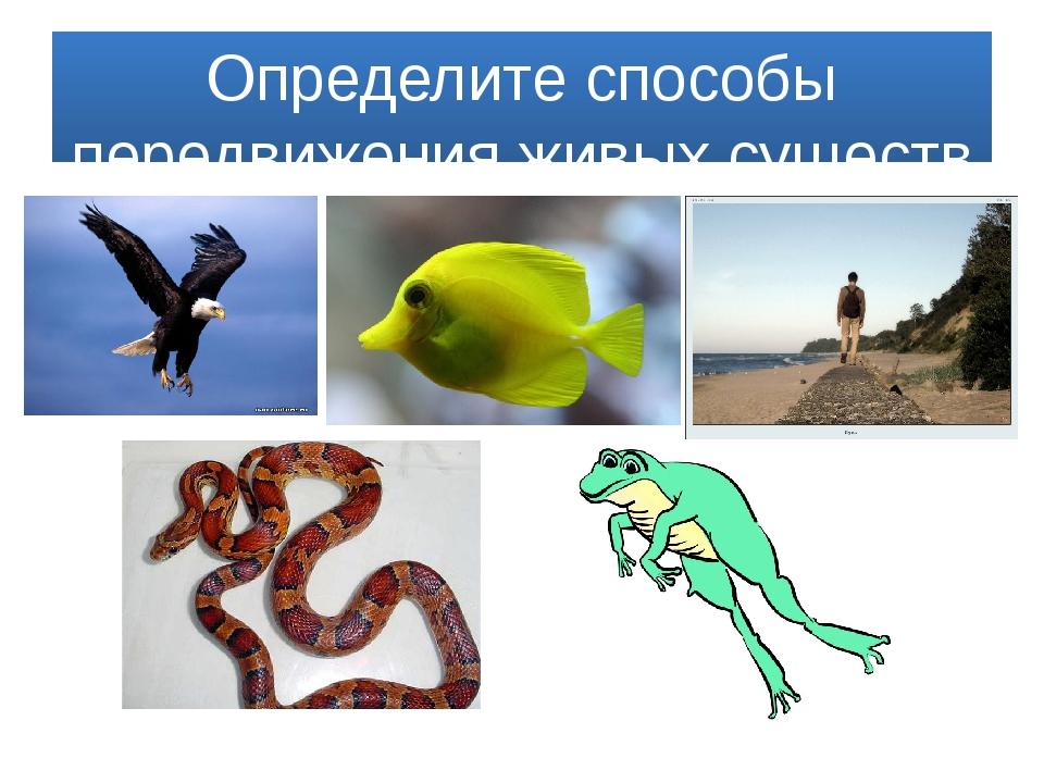 Определите способы передвижения живых существ