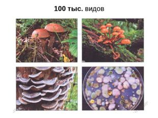 100 тыс. видов