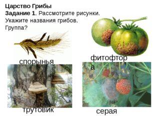 Царство Грибы Задание 1. Рассмотрите рисунки. Укажите названия грибов. Группа