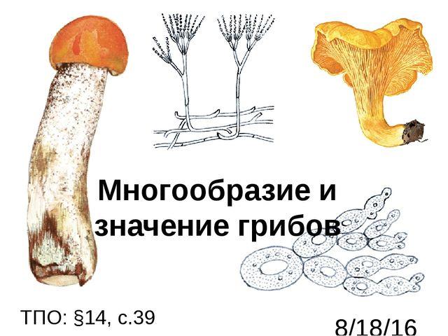 Многообразие и значение грибов ТПО: §14, с.39