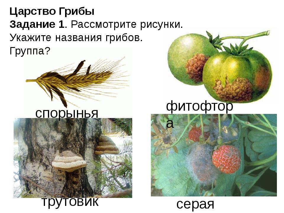 Царство Грибы Задание 1. Рассмотрите рисунки. Укажите названия грибов. Группа...