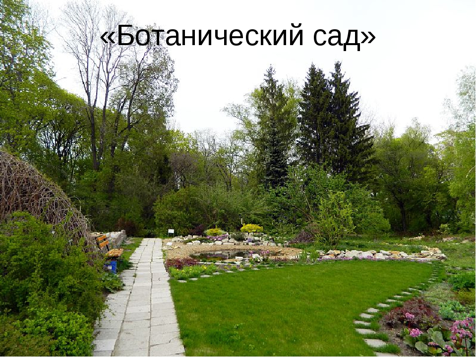«Ботанический сад»
