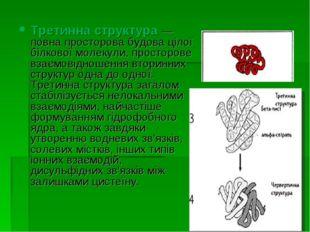 Третинна структура — повна просторова будова цілої білкової молекули, простор