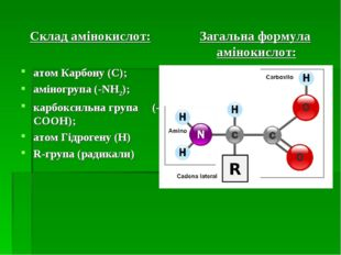 Склад амінокислот: атом Карбону (C); аміногрупа (-NH2); карбоксильна група (