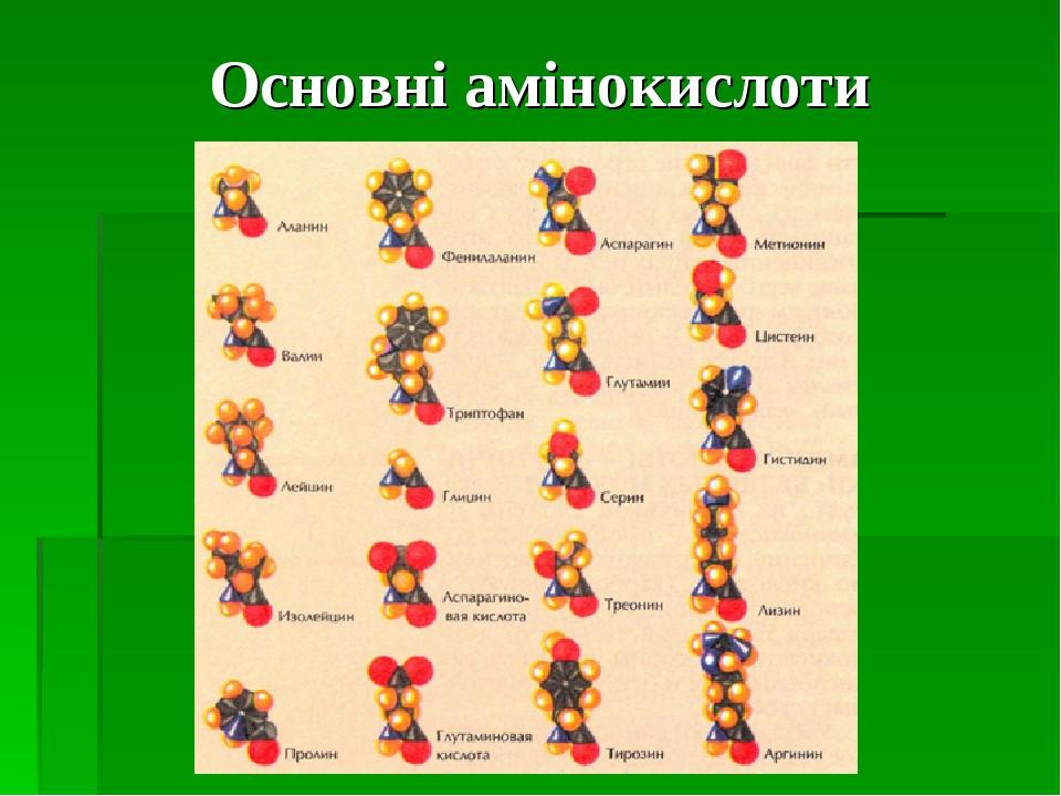 Основні амінокислоти
