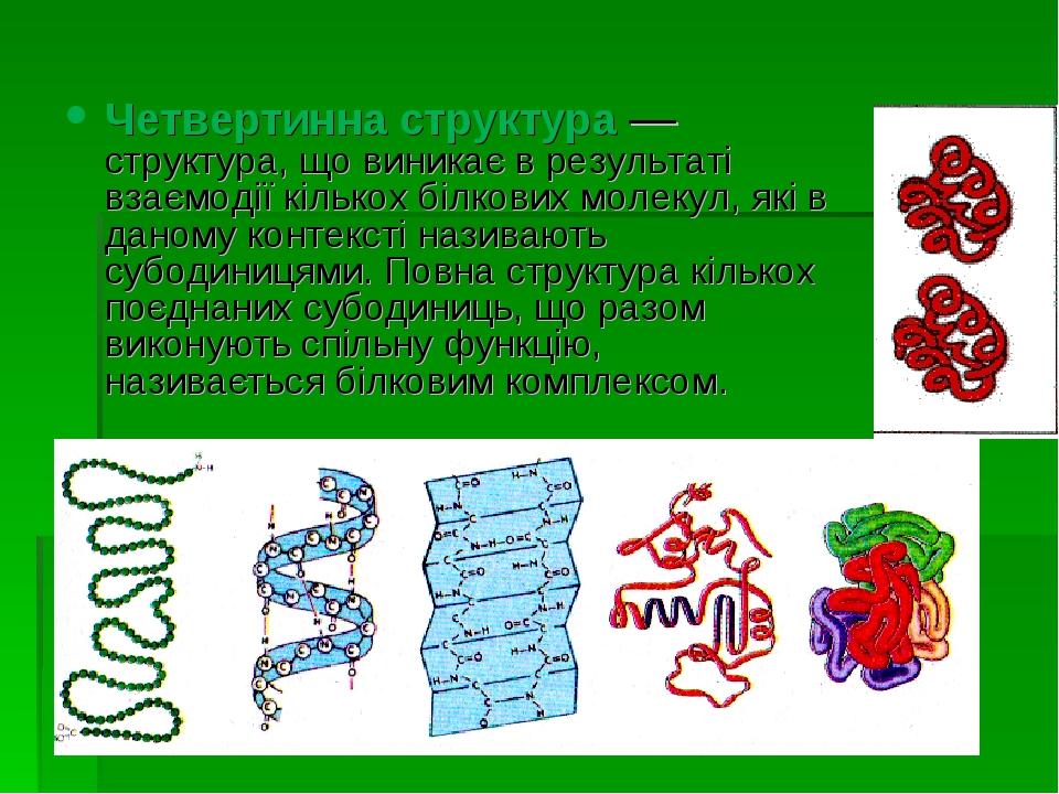Четвертинна структура — структура, що виникає в результаті взаємодії кількох...
