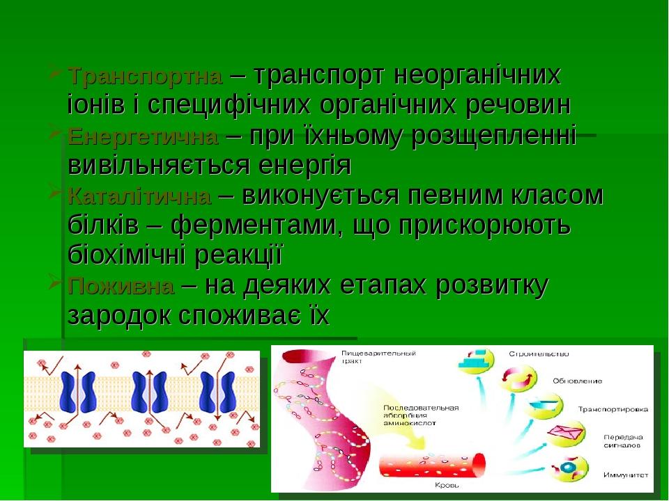 Транспортна – транспорт неорганічних іонів і специфічних органічних речовин Е...