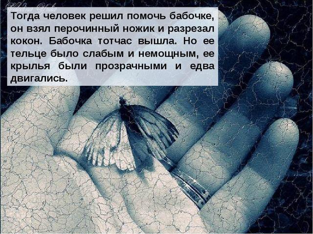 Тогда человек решил помочь бабочке, он взял перочинный ножик и разрезал кокон...