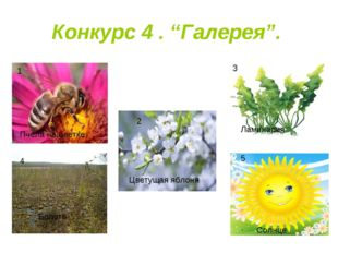 "Конкурс 4 . ""Галерея"". 1 3 4 5 2 Пчела на цветке Цветущая яблоня Ламинария Бо"
