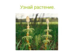 Узнай растение.