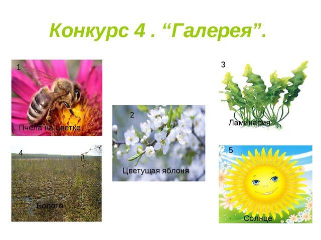 "Конкурс 4 . ""Галерея"". 1 3 4 5 2 Пчела на цветке Цветущая яблоня Ламинария Бо..."