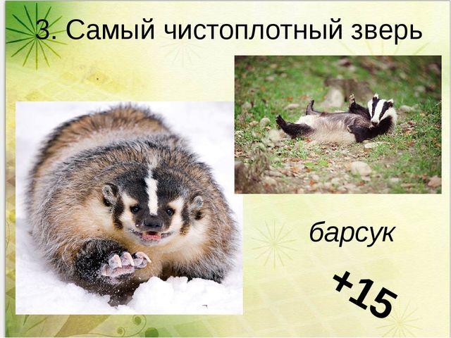 3. Самый чистоплотный зверь барсук +15