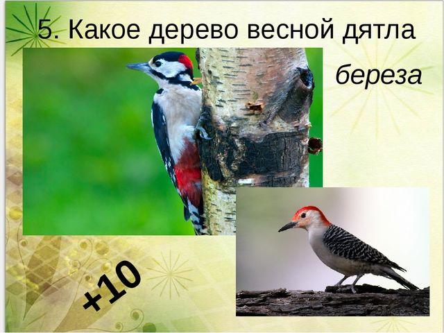 5. Какое дерево весной дятла поит? береза +10