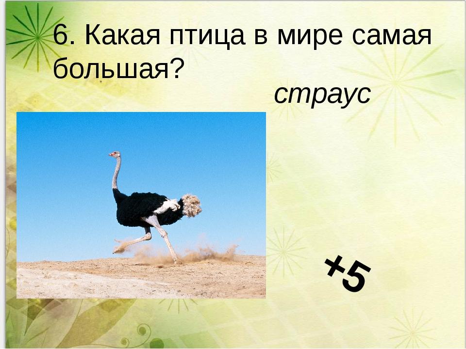 6. Какая птица в мире самая большая? страус +5