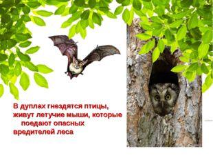 В дуплах гнездятся птицы, живут летучие мыши, которые поедают опасных вредите