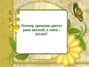 Почему орешник цветет рано весной, а липа – летом?
