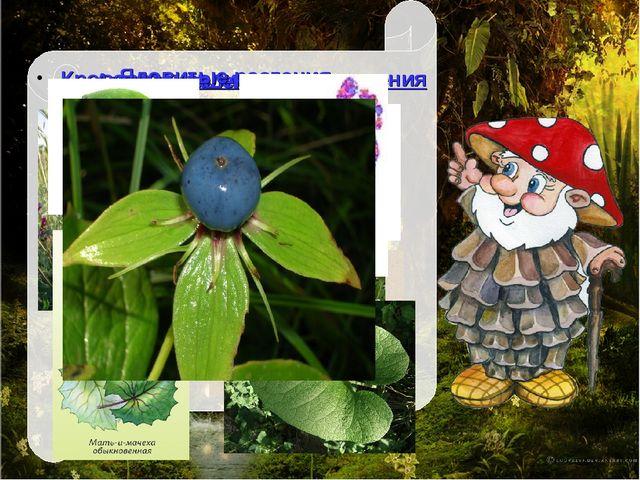 Кровоостанавливающие растения Ангину, кашель полечат: Ядовитые растения