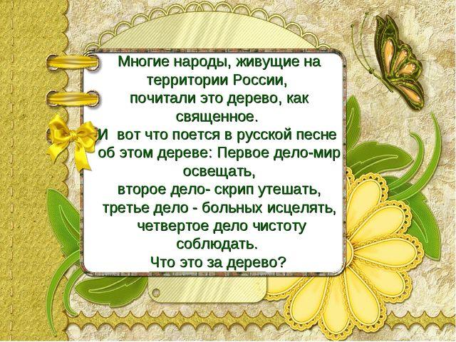 Многие народы, живущие на территории России, почитали это дерево, как священн...