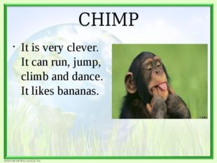 CHIMP It is very clever. It can run, jump, climb and dance. It likes bananas.