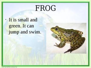 FROG It is small and green. It can jump and swim.