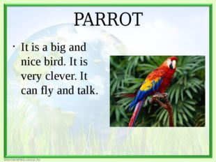 PARROT It is a big and nice bird. It is very clever. It can fly and talk.