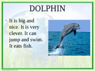 DOLPHIN It is big and nice. It is very clever. It can jump and swim. It eats