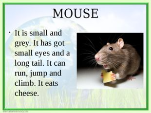 MOUSE It is small and grey. It has got small eyes and a long tail. It can run