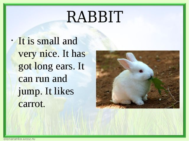 RABBIT It is small and very nice. It has got long ears. It can run and jump....