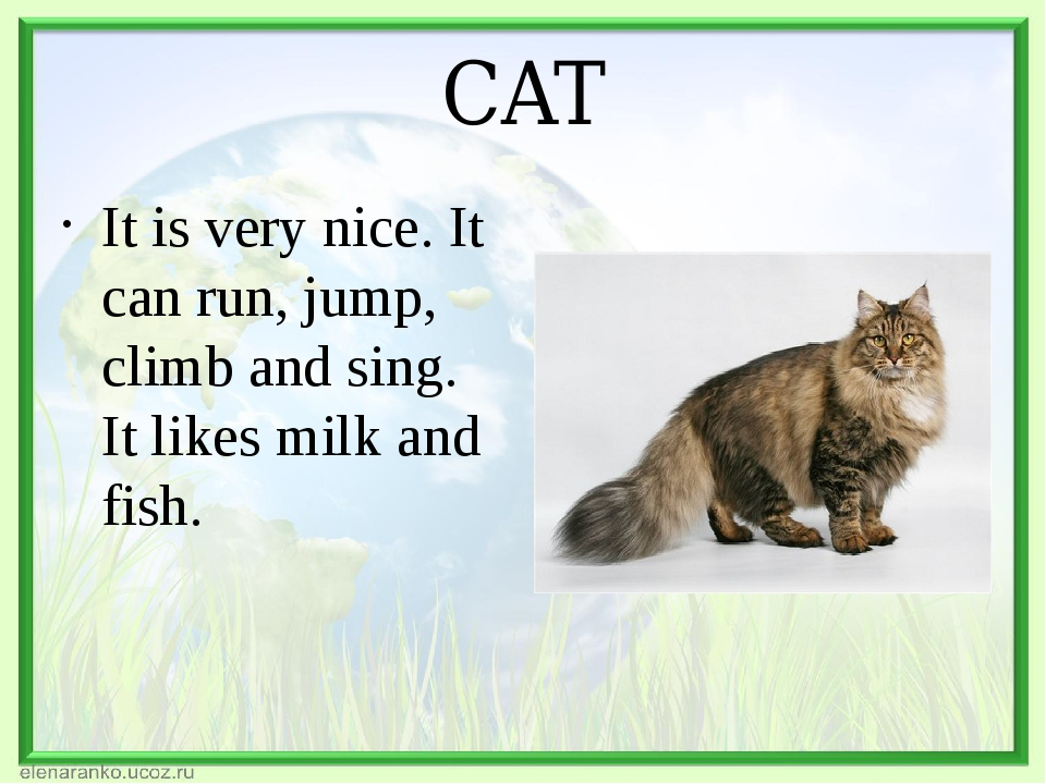 CAT It is very nice. It can run, jump, climb and sing. It likes milk and fish.