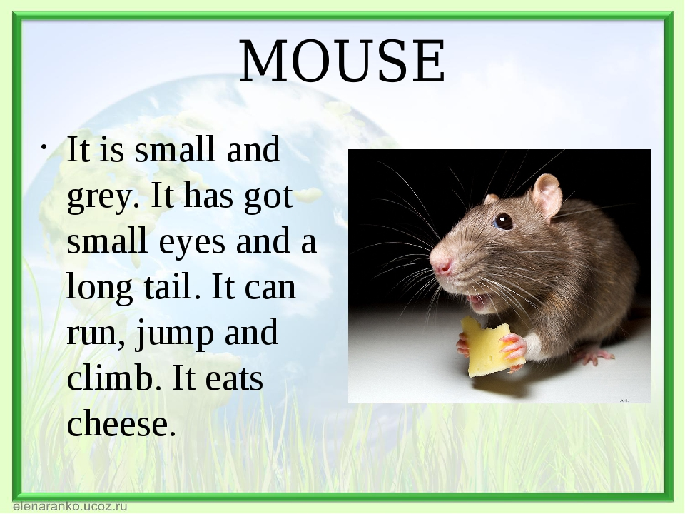 MOUSE It is small and grey. It has got small eyes and a long tail. It can run...