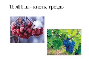 Тәлғәш - кисть, гроздь
