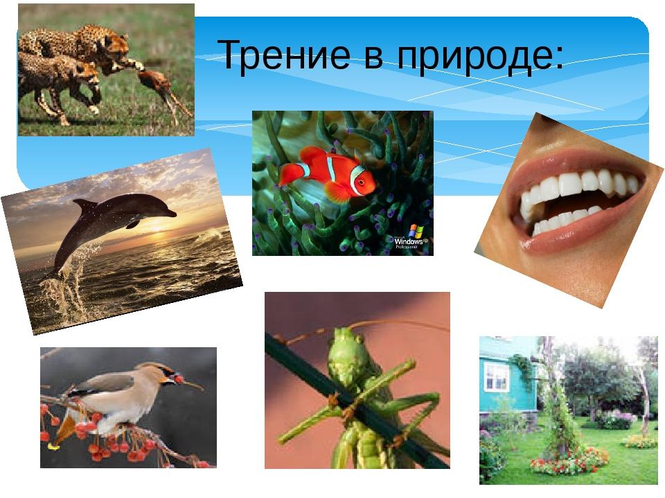 Трение в природе: