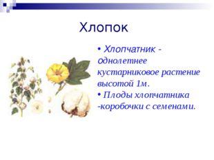 Хлопок Хлопчатник - однолетнее кустарниковое растение высотой 1м. Плоды хлопч