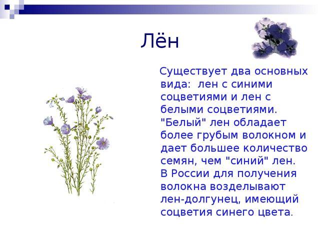 Лён Существует два основных вида: лен с синими соцветиями и лен с белыми соц...