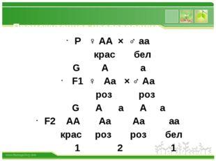 Промежуточное наследование Р ♀ АА × ♂ аа крас бел G А а F1 ♀ Аа × ♂ Аа роз р