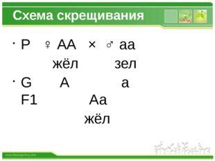 Схема скрещивания Р ♀ АА × ♂ аа жёл зел G А а F1 Аа жёл www.themegallery.com