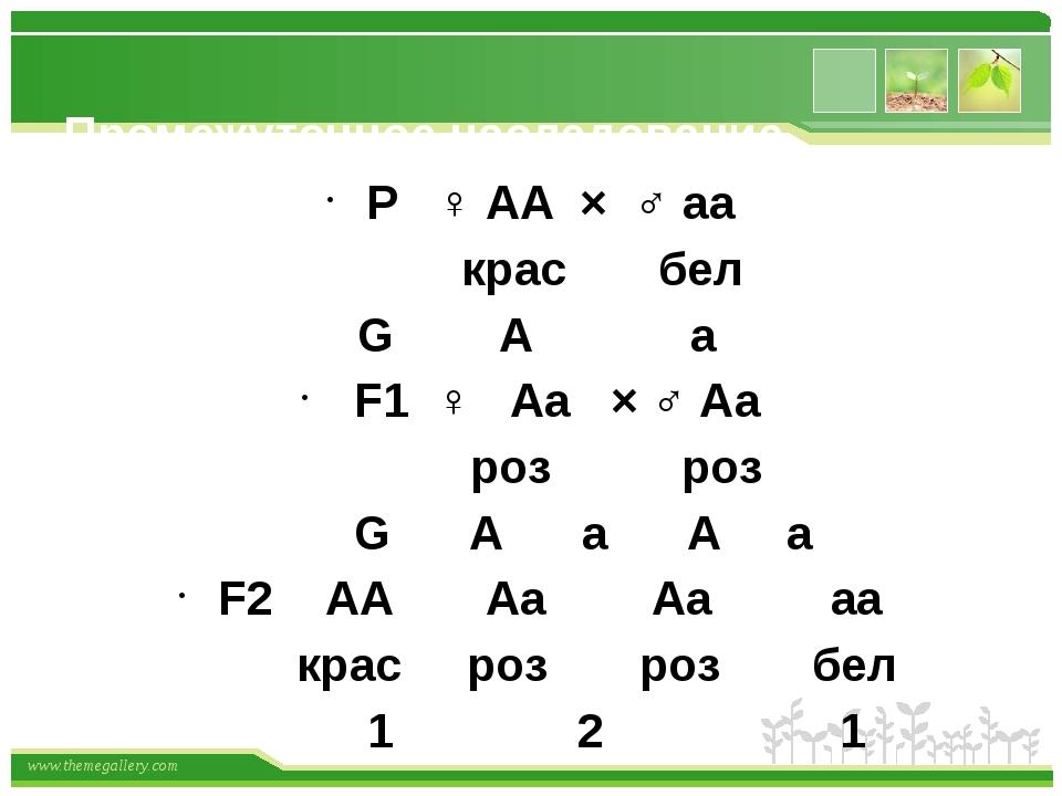 Промежуточное наследование Р ♀ АА × ♂ аа крас бел G А а F1 ♀ Аа × ♂ Аа роз р...