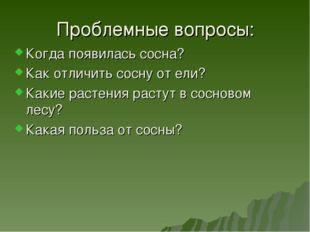 Проблемные вопросы: Когда появилась сосна? Как отличить сосну от ели? Какие р