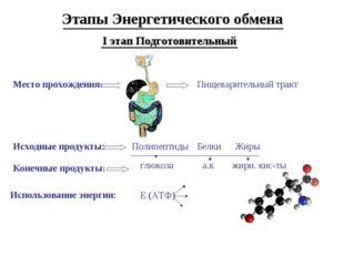 Этапы Энергетического обмена I этап Подготовительный Место прохождения: Пищев