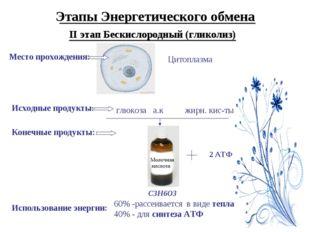 Этапы Энергетического обмена II этап Бескислородный (гликолиз) Место прохожде