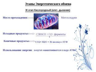 Этапы Энергетического обмена III этап Кислородный (клет. дыхание) Место прохо
