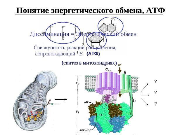 Диссиминация = Энергетический обмен Понятие энергетического обмена, АТФ Совок...