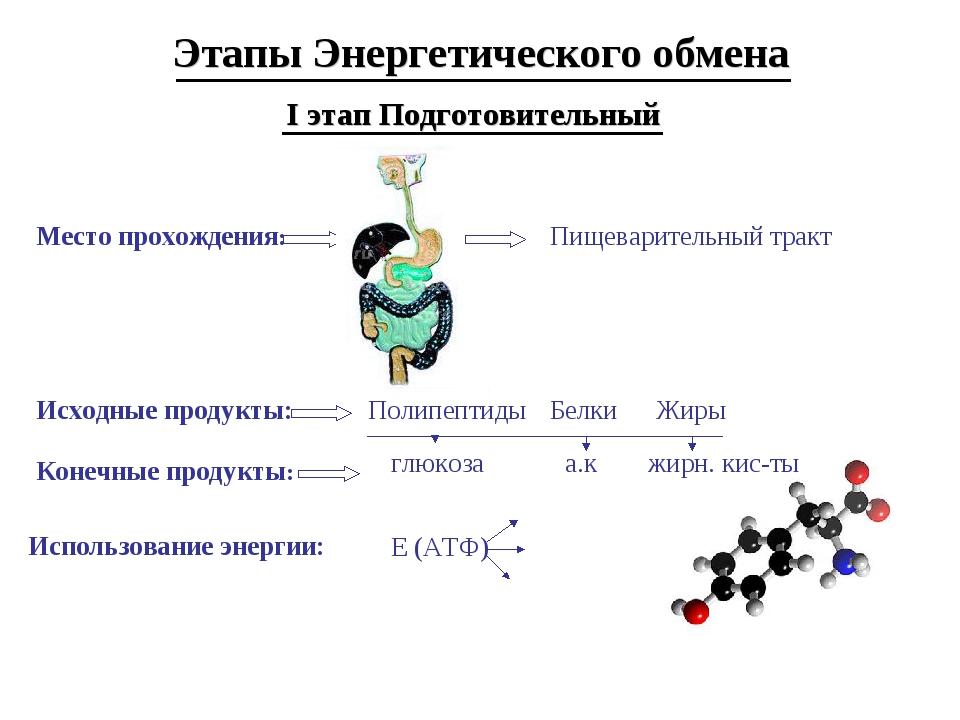 Этапы Энергетического обмена I этап Подготовительный Место прохождения: Пищев...