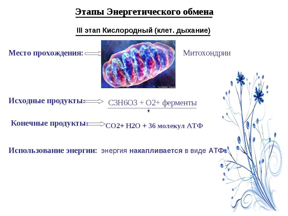 Этапы Энергетического обмена III этап Кислородный (клет. дыхание) Место прохо...