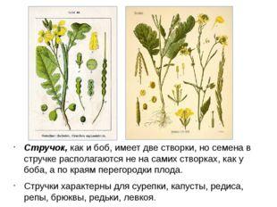 Стручок, как и боб, имеет две створки, но семена в стручке располагаются не н