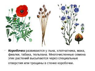 Коробочки развиваются у льна, хлопчатника, мака, фиалки, табака, тюльпана. Мн