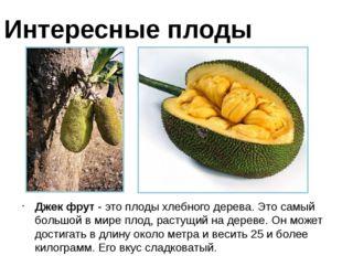 Джек фрут - это плоды хлебного дерева. Это самый большой в мире плод, растущи