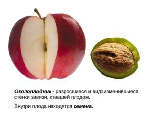 Околоплодник - разросшиеся и видоизменившиеся стенки завязи, ставшей плодом.