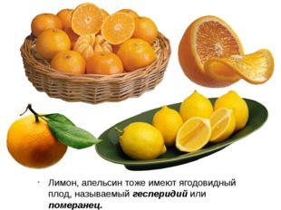 Лимон, апельсин тоже имеют ягодовидный плод, называемый гесперидий или помера