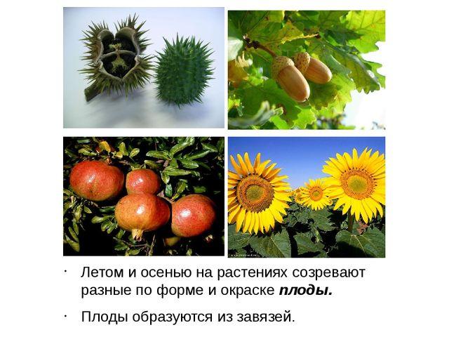 Летом и осенью на растениях созревают разные по форме и окраске плоды. Плоды...